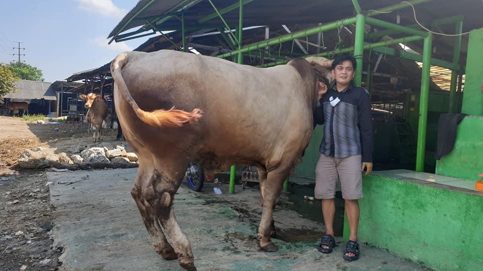 qurban sapi qurban,sapi qurban bekasi,sapi qurban 2020,sapi limosin,sapi bali,sapi jogrogan,daging sapi,jenis sapi,jenis qurban,sapi,qurban 1441,qurban bekasi,sapi bekasi,sapi qurban sehat,sapi syari,sapi untuk kurban,sapi kurban,sapi murah,qurban murah,sapi berkualitas,sapi ternak,sapi gemuk,sapi siap qurban,sapi tercinta,sapi putih,sapi mewah,otot sapi,daging,daging qurban,promo qurban,harga sapi,harga promo qurban,obral sapi,pasar qurban,pasar sapi,tempat potong,sapi potong,tempat qurban,sapi ternak,bibit sapi,sapi gahar,sapi raksasa,sapi terbesar,dunia sapi,juragan sapi,ahli sapi,menyalurkan daging,daging qurban